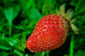 Fresh red strawberries — Stock Photo