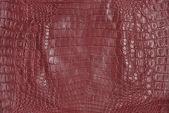 Crocodile skin texture — Stock Photo