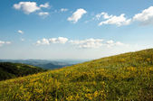 Caucasian Mountains in spring time full of yellow wildflowers — Stock Photo