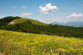 Montagne nel periodo estivo — Foto Stock