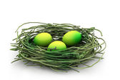 Egg and nest — Stock Photo