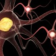 Active Neurone — Stock Photo