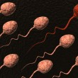 Sperm cells competing and red one winning — Stock Photo #18646637
