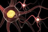 Active Neurone — Stock Photo