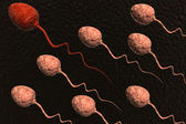 Sperm cells competing and red one winning — Stock Photo
