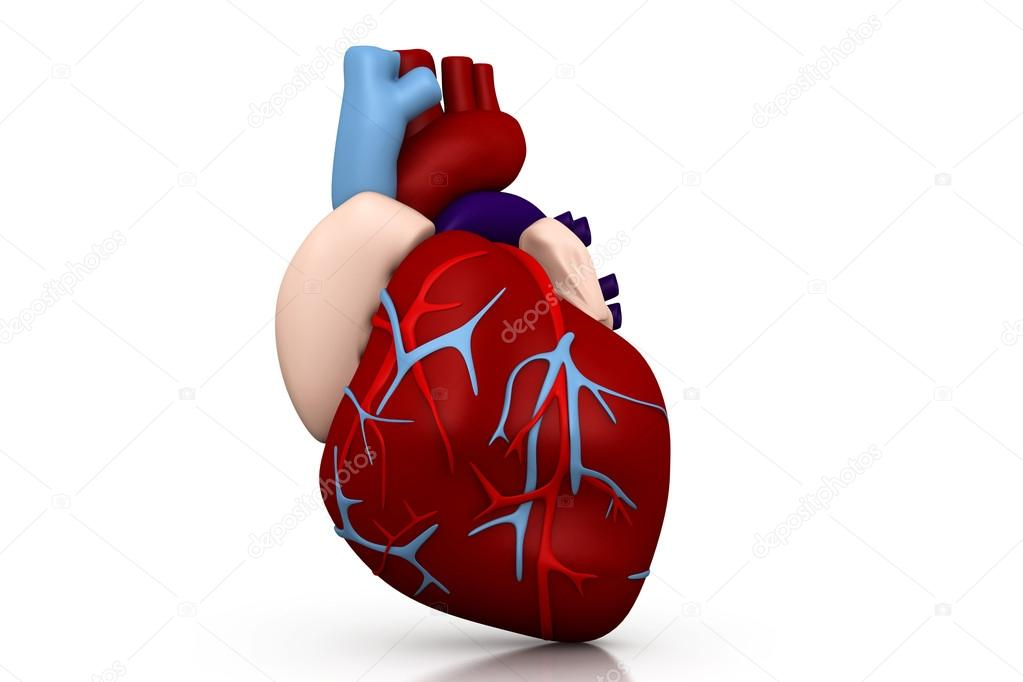 Human heart — Stock Photo #18647999