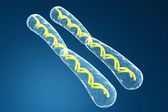 Chromosome — Stock Photo