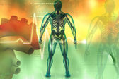Digital illustration of human body — Stock Photo