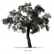 Olive Tree silhouette. — Stock Vector