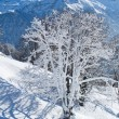 Winter landscape - Stockfoto
