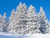 アルプスの冬 — ストック写真