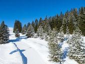 Skiing slope — Stock Photo