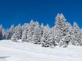 滑雪坡 — 图库照片