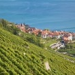 Lavaux region - Stock Photo