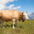 Swiss cow — Stock Photo #21756755