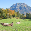 Autumn in alps — Stock Photo #22014481