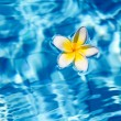 Tropical frangipani flower in water — Stock Photo