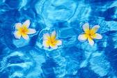 Flower in blue water — Stock Photo