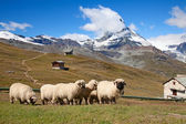 Matterhorn — Foto de Stock