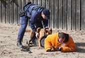 Policejní psi v práci — Stock fotografie