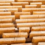 Fresh wooden studs — Stock Photo #34706905