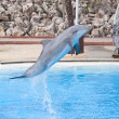 Bottlenose dolphin — Stock Photo #34707205