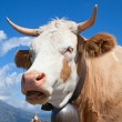 Swiss cow — Stock Photo #39127257