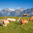 Swiss cow — Stock Photo #39128471