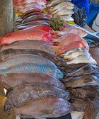 Mercato ittico di maputo — Foto Stock