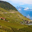 Lavaux region — Stock Photo #45927543
