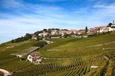Lavaux bölgesi — Stok fotoğraf
