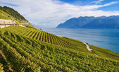 Lavaux region — Stock Photo