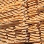 Fresh wooden studs — Stock Photo #50356835
