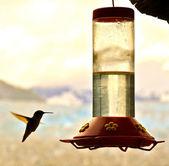 Hummingbird and feeder — Stock Photo