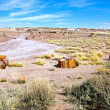 Stock Photo: Petrified Forest-1-57