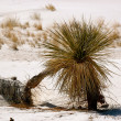 Stock Photo: White Sands New Mexico
