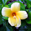 Stock Photo: Flower yellow