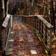 Autumn trail into the woods-1 — Stock Photo #13426389