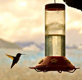 Hummingbird and feeder — Stock Photo