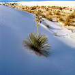 Stock Photo: White Sands