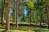 Black Hills South Dakota-1-25 — Stock Photo