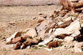 Newspaper Rock Pterglyphs — Stock Photo