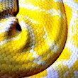 Yellow snakeskin — Stock Photo #21810827