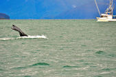 Whale watching — Stockfoto