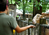 Myrtle Beach - Boy Feeds goat — Stock Photo