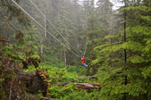 Zip Lining in the middle of a forest — Stok fotoğraf