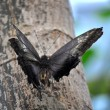 Stock Photo: Butterfly on limb