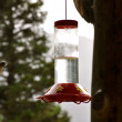 Hummingbird Flies to feeder — Stock Photo