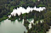 Trees in Alaska — Stock Photo