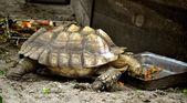 Turtle Eating — Stock Photo
